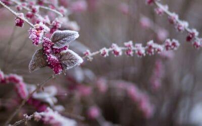 Der Winter kommt, wir werden kreativ!